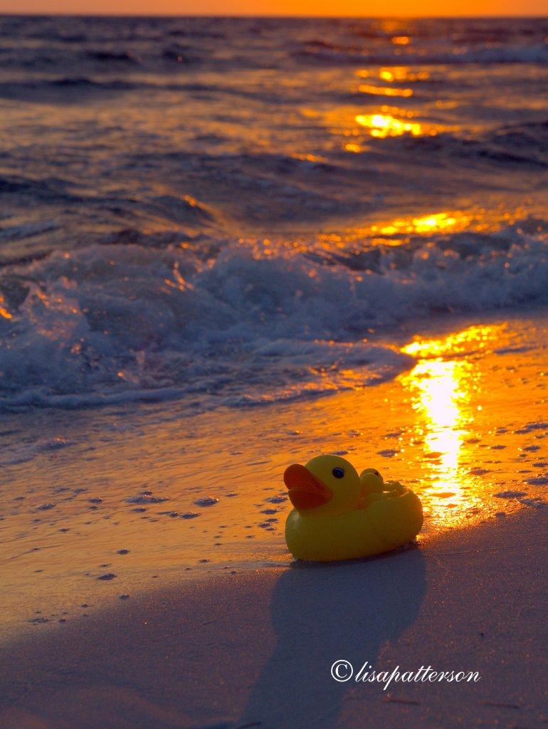 ducky3