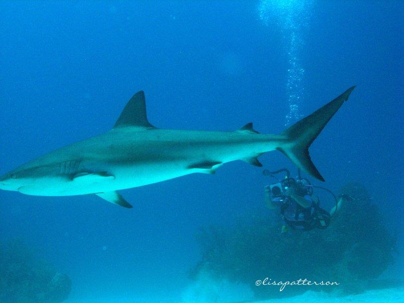 melinda&shark