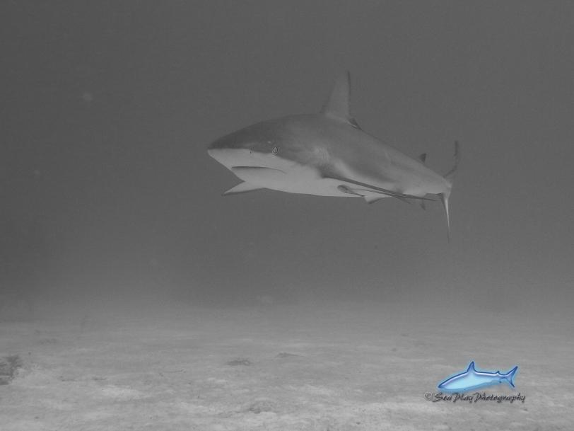 Shark!  woo hoo!