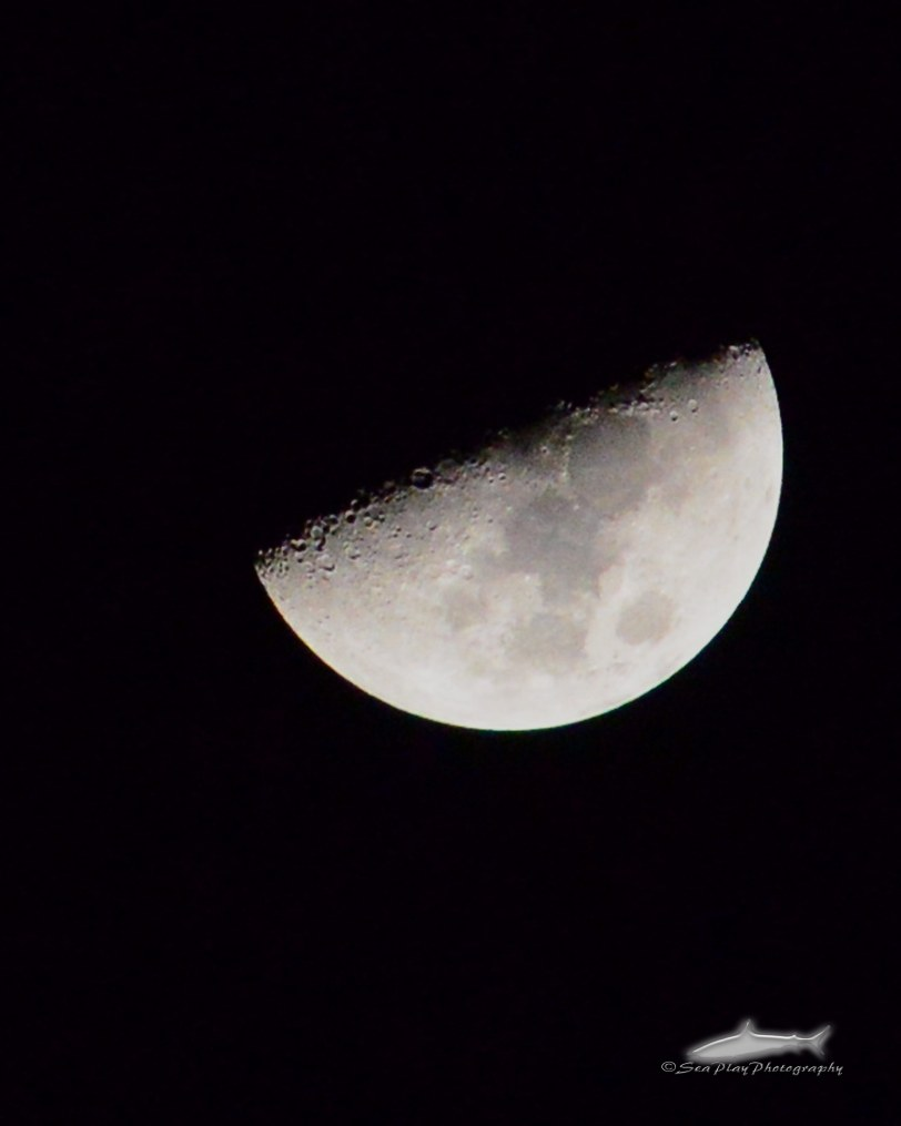 moon-firstquarter-WM