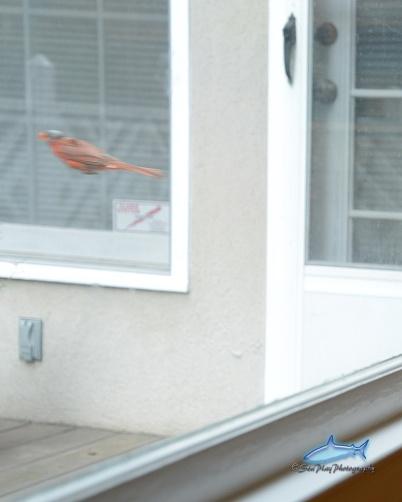Bird outside house